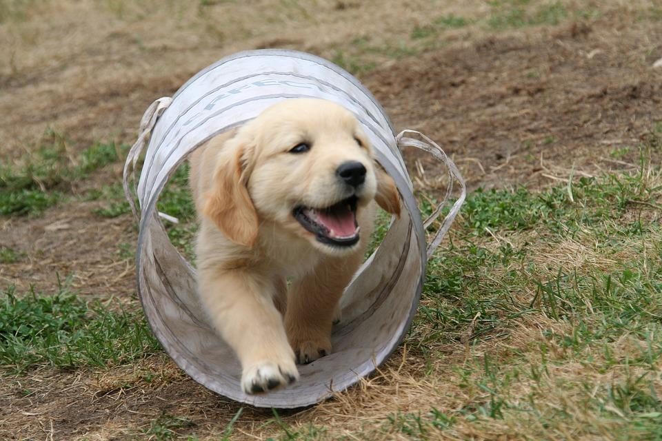 Att uppfostra en hundvalp